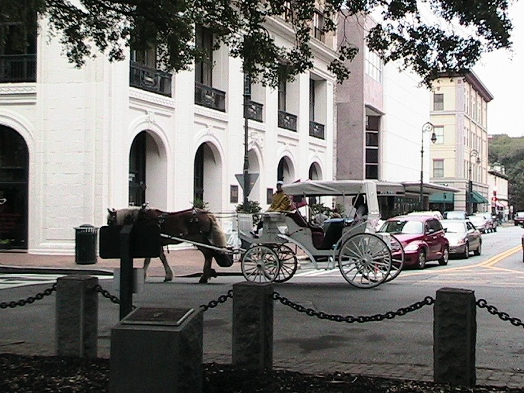 savannah-visiting