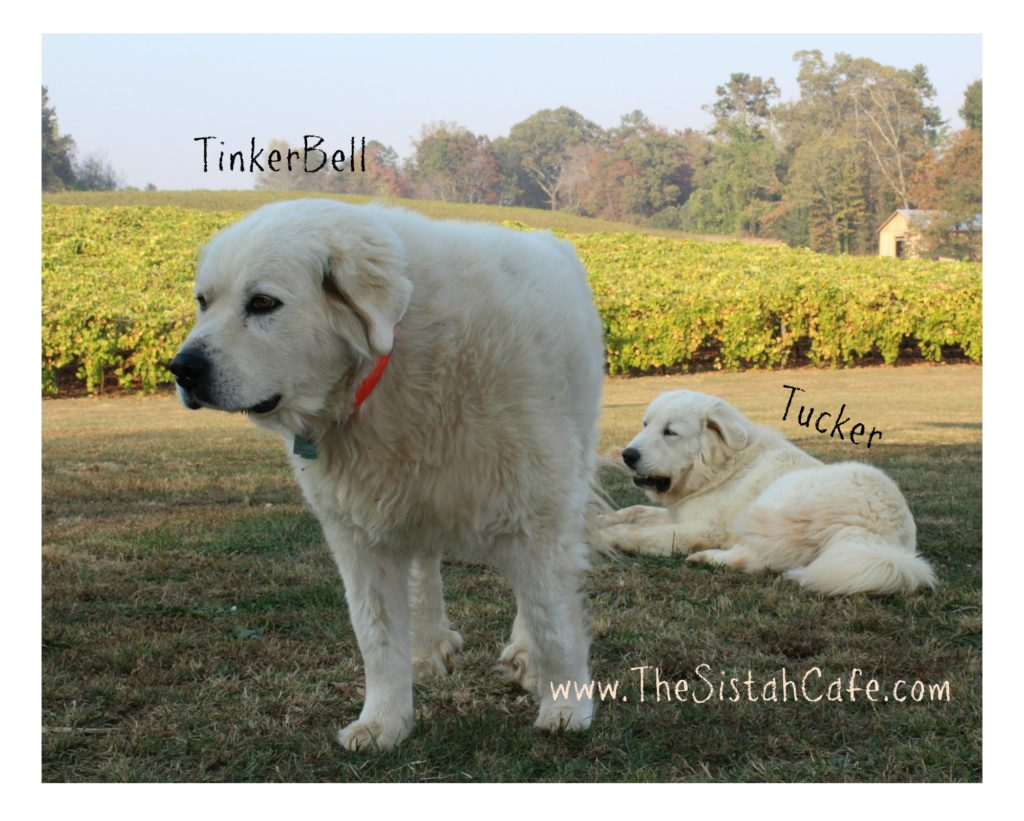 tinkerbell-tucker