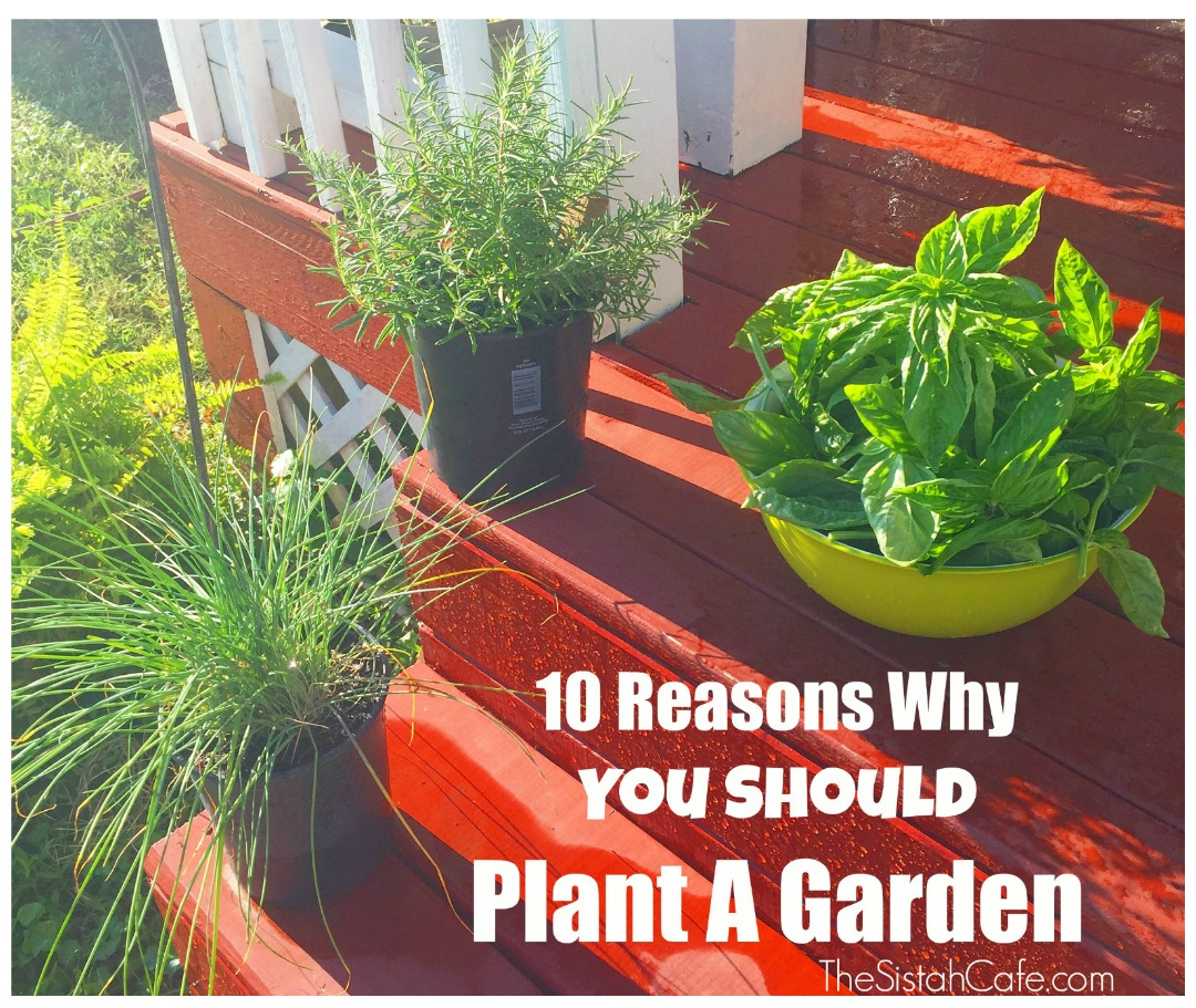 10 reasons why you should plant a garden the sistah cafe for Planting a garden