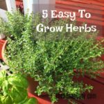 easy-to-grow-herbs